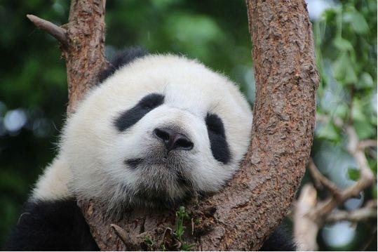 Python,Numpy,Pandas…数据科学家必备排序技巧